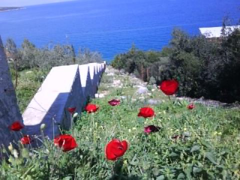 Peloponnese poppies