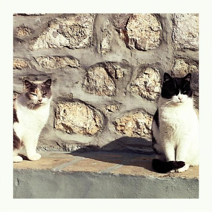 hydra-cats